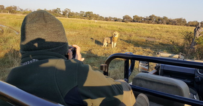 visitor taking a photo of a lion, wildlife, Botswana