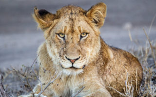 Djuma, Sabi Sands Game Reserve in South Africa © John Vosloo
