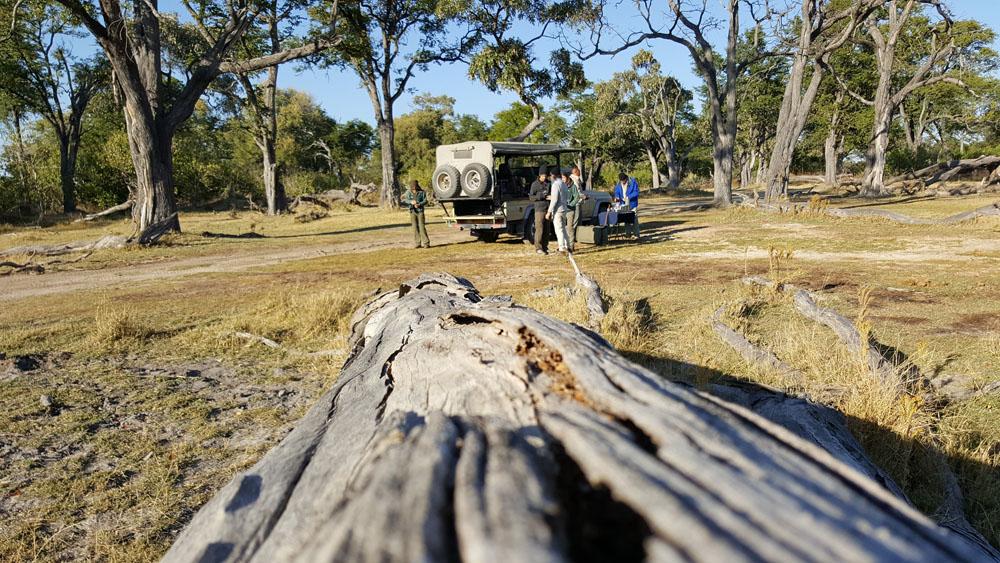 African safari, safari vehicle, log, forest