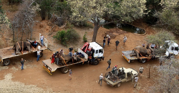 elephant rescue, relocation, wildlife, South Africa