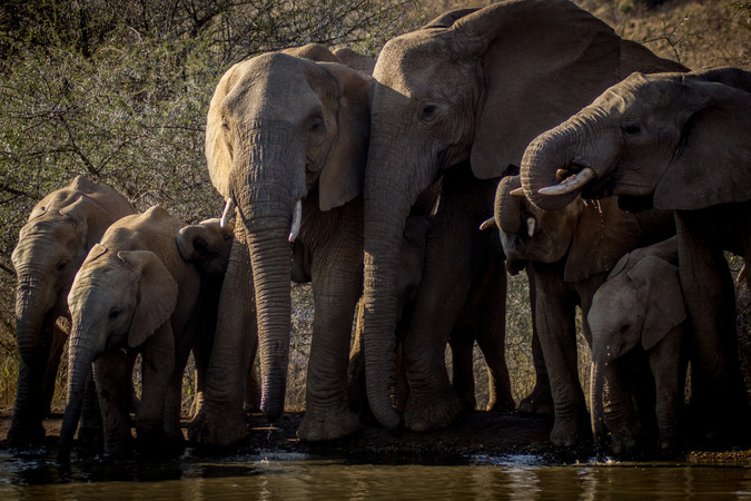 elephant herd, drinking water, wildlife, Hwange National Park, Zimbabwe
