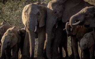 elephant herd, drinking water, wildlife, Hwange National Park, Zimbabwe
