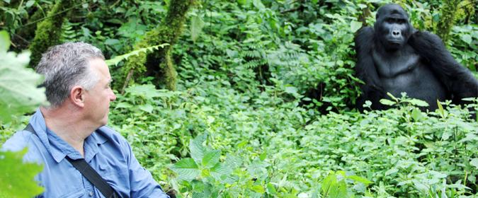 mountain gorilla, tourist, forest, Rwanda