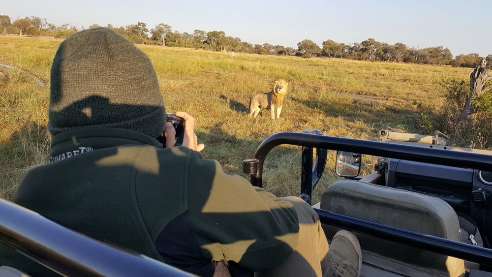 Watching a lion from a game drive vehicle in Khwai, Okavango Delta