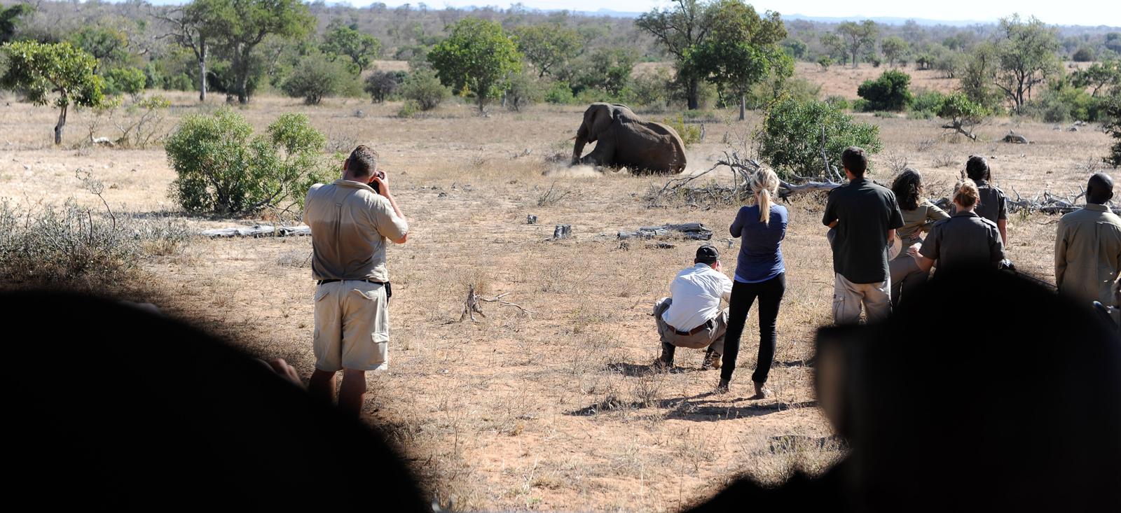 Conservation team watching an elephant