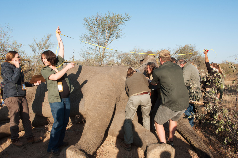 Hands-on conservation work in the African bush
