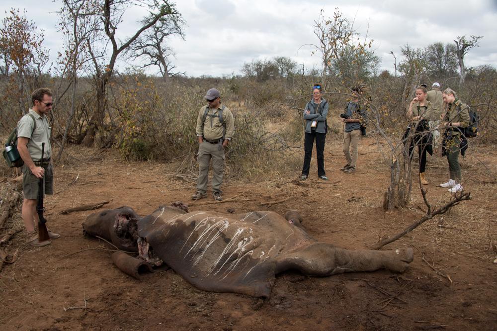A rhino killed by poachers