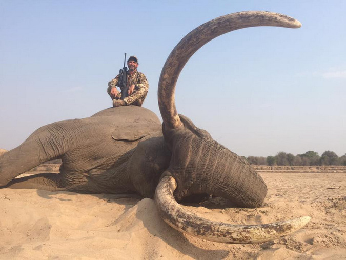 A large bull elephant shot by a trophy hunter in Zambia