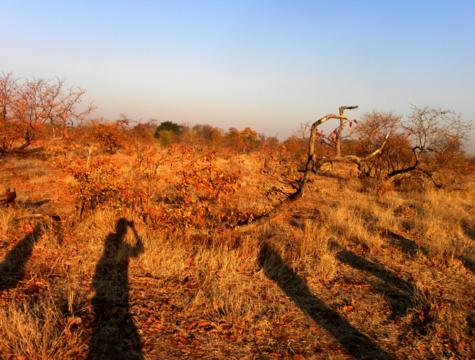 Walking through the bush with shadows in Africa © Mark Smeltz