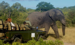 Viewing an elephant while on safari in Africa © Mark Smeltz