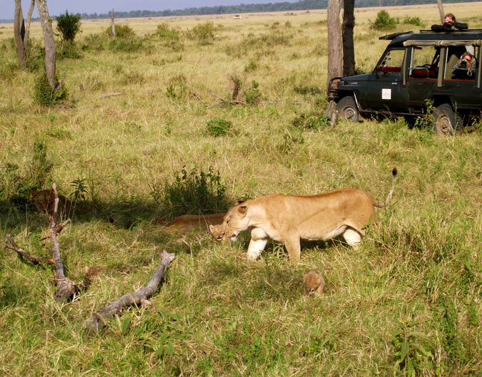 Guests take photos of lions while on safari © Mark Smeltz