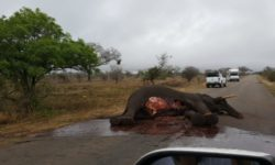 Kruger elephant killed by lightning