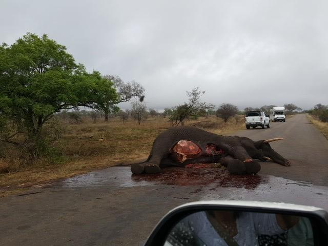 Kruger elephant killed by lightning