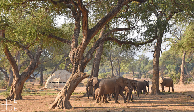 A wildlife hide in South Luangwa with elephants passing by