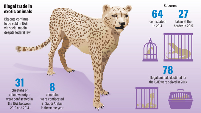 Illustrated figure of the illegal trade in exotic animals