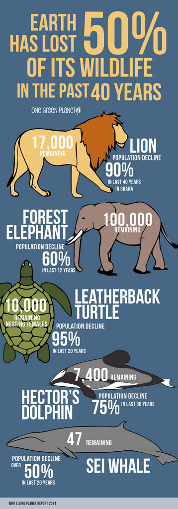 Table showing percentage of wildlife lost in past 40 years