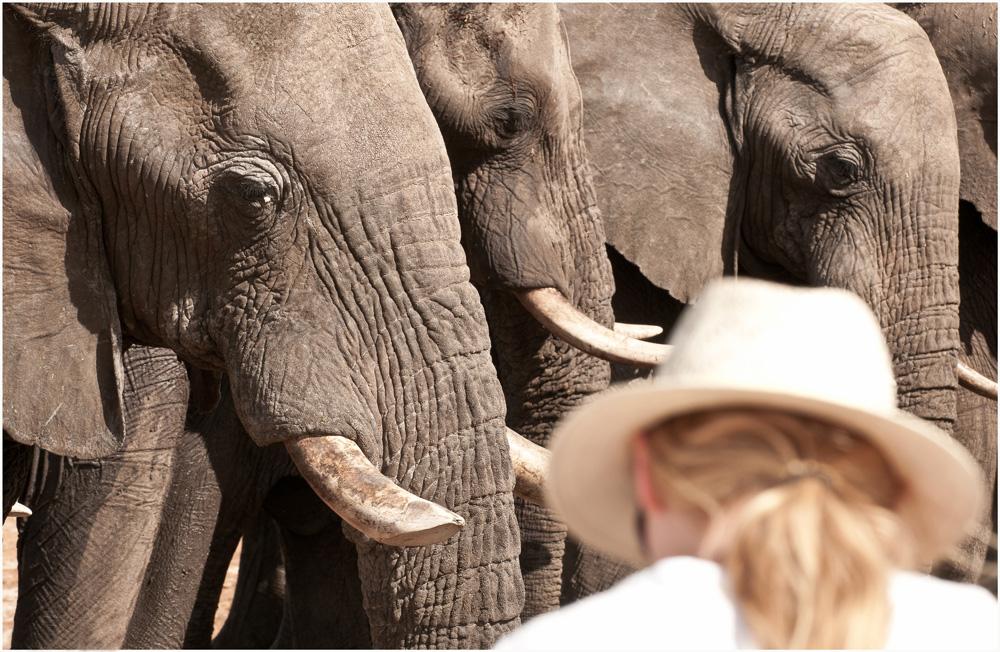 Elephants and tourist - Water for Elephants Trust, Botswana
