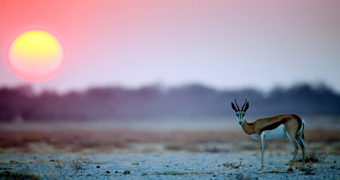 Antelope and sunset in Namibia