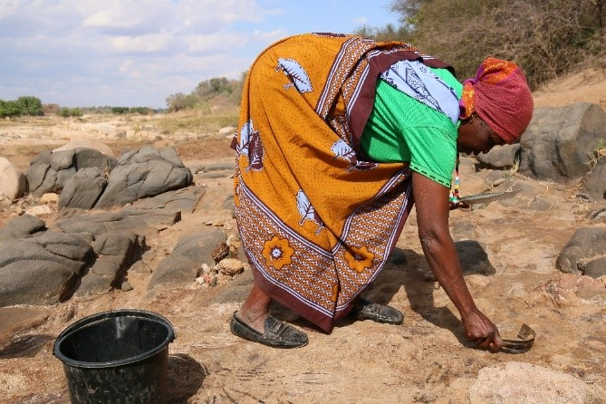 A woman collects sand containing salt in the dry riverbed