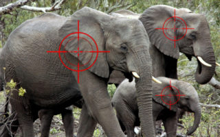 Herd of elephants with sight targets