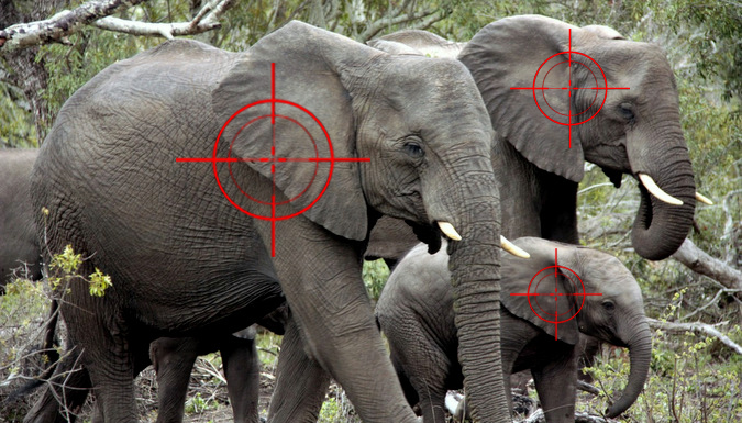 Herd of elephants with target sights