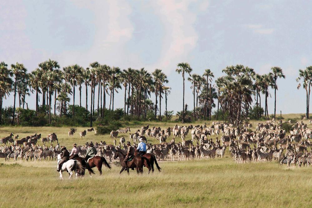 People on horseback looking a large herd of zebra
