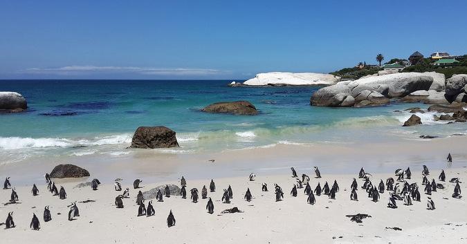 Penguins on a beach