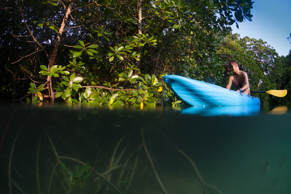 Kayaking in a peaceful marine-rich environment