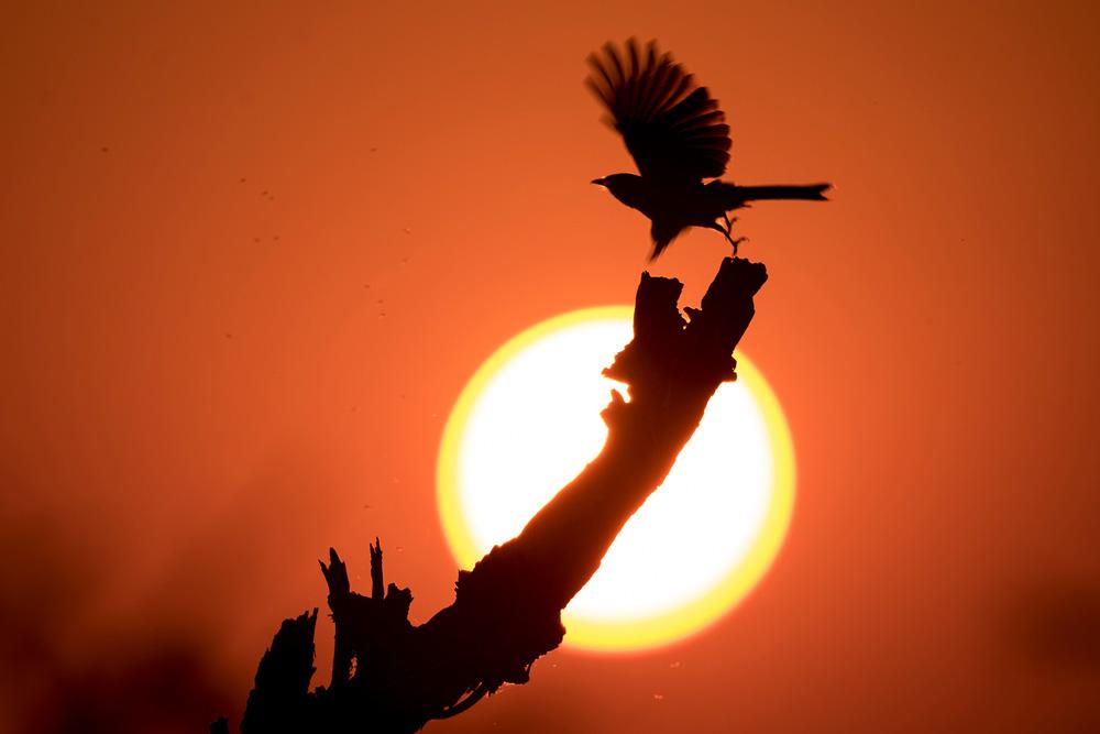 A bird at sunset