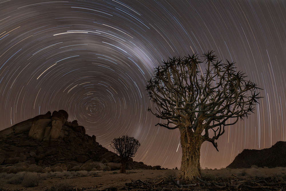 Quiver trees in the Richtersveld, South Africa