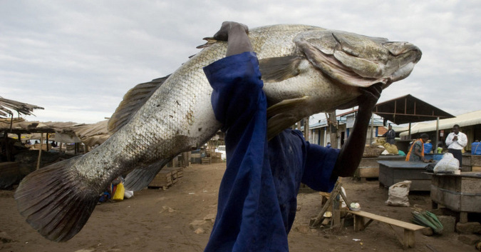 Large fish being carried by man in market
