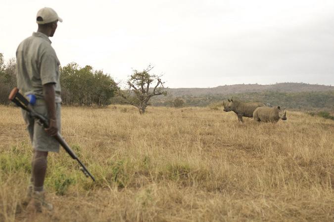Ranger protecting rhinos in Hluhluwe iMfolozi Park in KwaZulu-Natal, South Africa