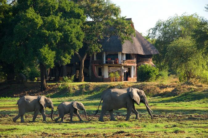 Elephants walking by house in South Luangwa