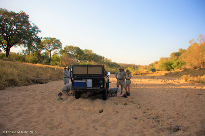 Field guides fixing a 4x4 safari game drive vehicle