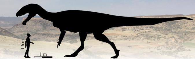 Estimated size of a megatheropod dinosaur