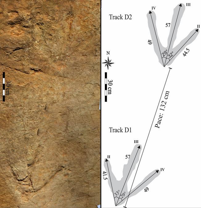 Megatheropod dinosaur tracks