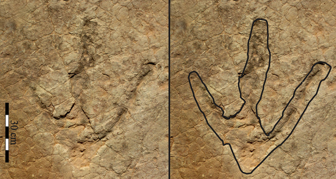 Footprint of a massive dinosaur discovered in Lesotho