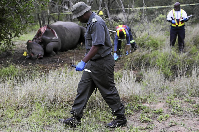 Members of a forensics perform an autopsy in an attempt to collect evidence at the scene of a recently poached rhino at Kruger National Park