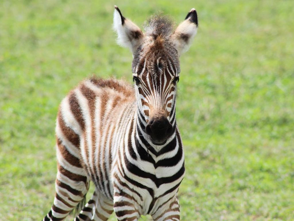 Botswana green season with Africa Geographic