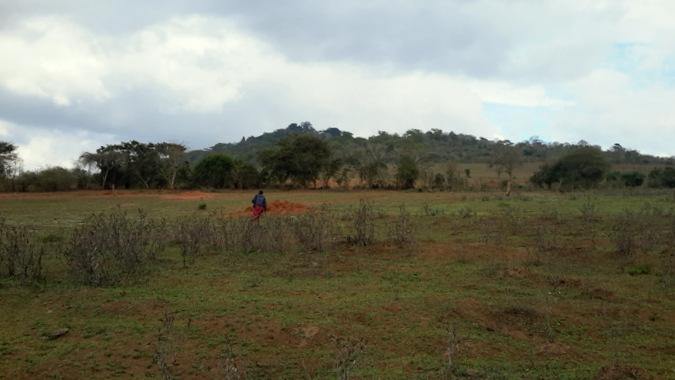 Maasai steppe landscape, wildlife