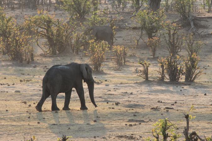 Two elephants in Hwange National Park, Zimbabwe