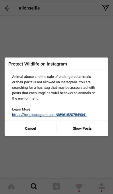 Protect wildlife on Instagram message, #lionselfies