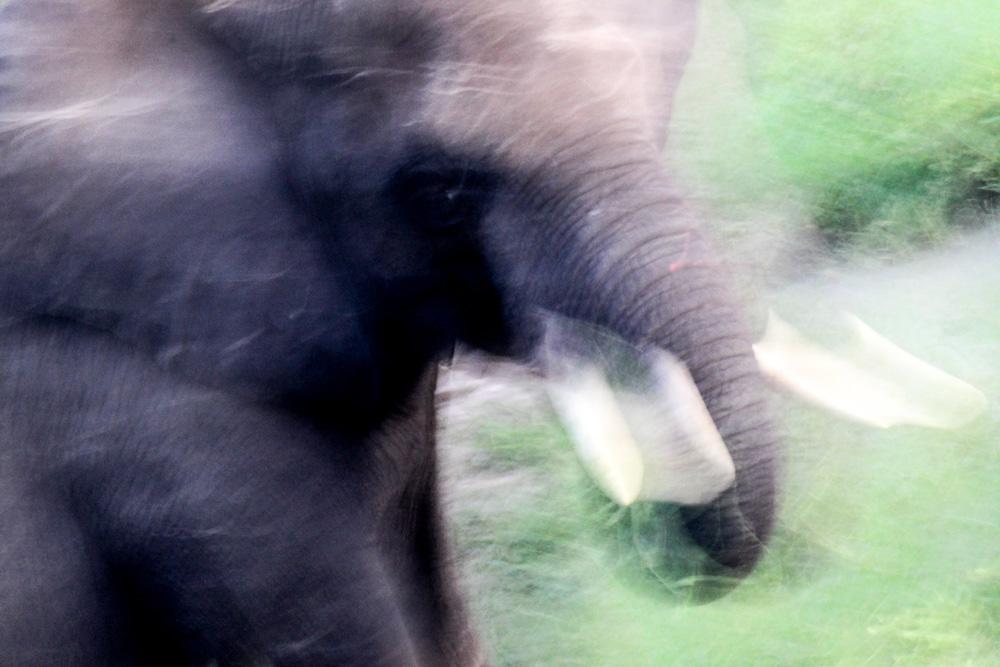 A close up of an elephant.