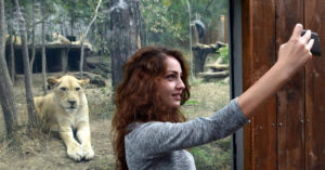 A woman takes a selfie in front of the lions open-air cage at the Tbilisi zoo
