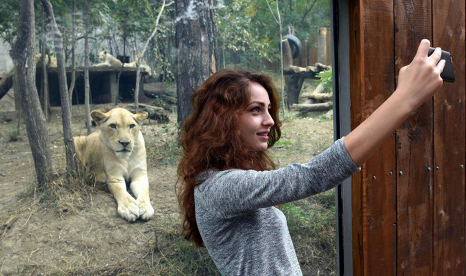 woman taking selfie with lion at a zoo