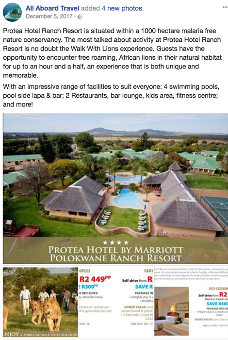 Lion walk offered by Ranch Resort Protea Hotel, Limpopo