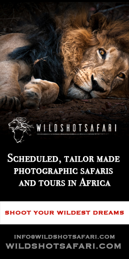 Wildshot Safari