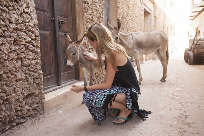 Donkeys and tourist in Lamu Town, Kenya
