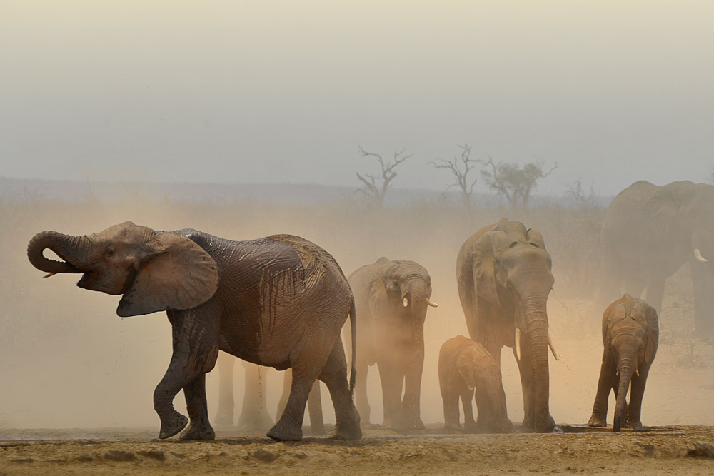 A herd of elephants at a waterhole in Kruger National Park, South Africa