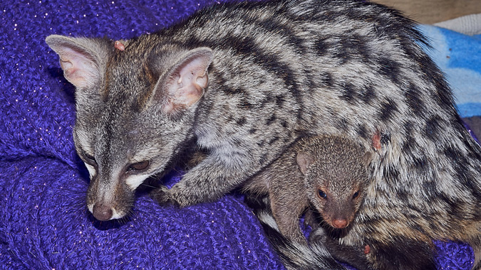 baby genet and a friend